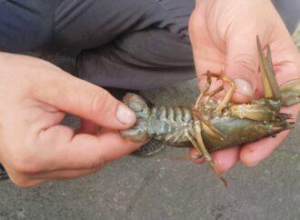 В водоемах Одесского региона временно запретят ловить раков