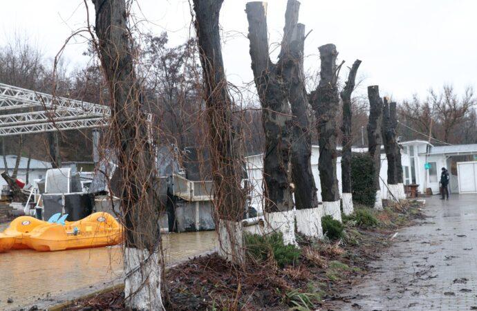 Владельцев ресторана на одесском пляже оштрафуют за срез деревьев