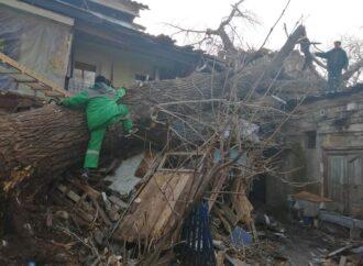 Последствия урагана в Одессе: половину обрушенных деревьев вывезли, работа транспорта восстановлена