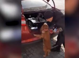 В порту близ Одессы служебный пес учуял в машине патроны (видео)