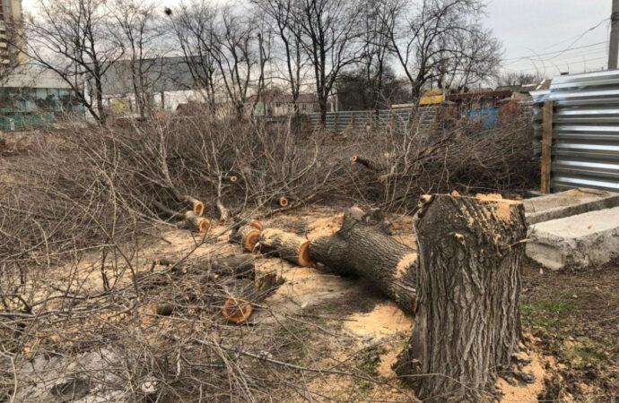 В Одессе вырубили деревья под строительство заправки