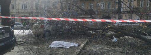 В Одессе на женщину упало дерево: она погибла