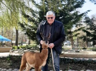 Что произошло в Одессе 27 марта: похищение несовершеннолетнего парня и новорожденный детеныш ламы