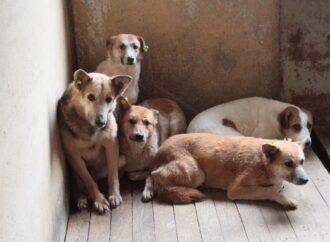 У місті на Одещині невідомі отруїли бродячих та домашніх собак