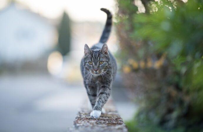 Коронавирус в мире: в Бельгии обнаружили инфекцию у домашнего кота