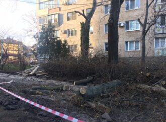 Ради офисной постройки в Одессе устроили «древоцид»: заказчику грозит наказание (фото)