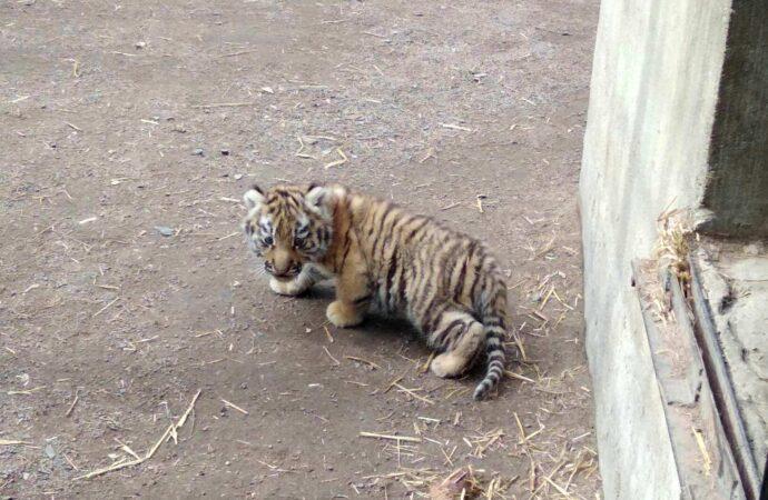 Что произошло в Одессе 5 марта: новорожденный тигренок в зоопарке и подозрение на коронавирус