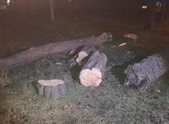В Одессе задержали мужчину, уничтожавшего деревья в приморской зоне города