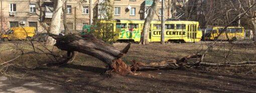 Вопрос ребром: что нужно, чтобы деревья в Одессе не падали на горожан?