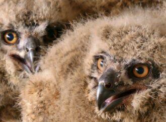 Теперь официально: в Одесском зоопарке будут спасать конфискованных животных и птиц (видео)