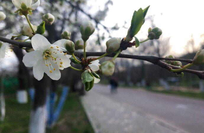 Погода на 19 березня. У цей день в Одесі буде сонячно
