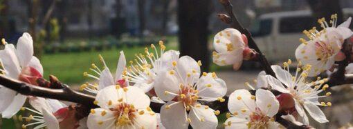 Погода на 25 березня. В Одесі температура повітря вночі знизиться до 3°С морозу