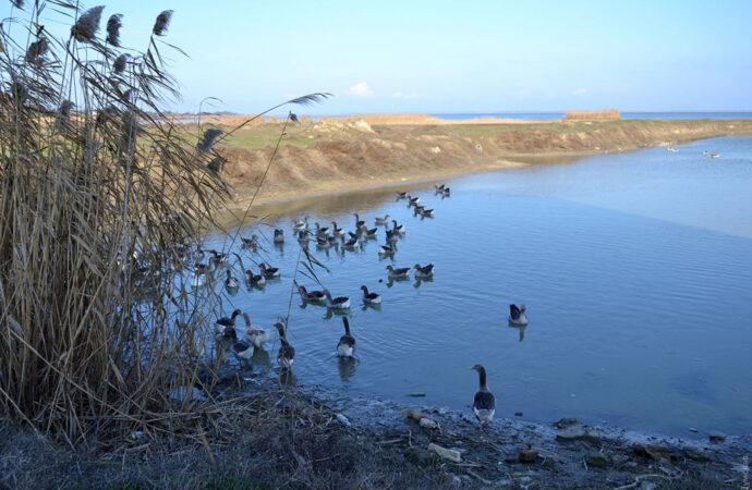 В Одесской области наполняют обмелевшие озера Придунавья