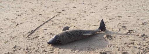 На побережье в Одессе нашли тушку мертвого дельфина (фото)