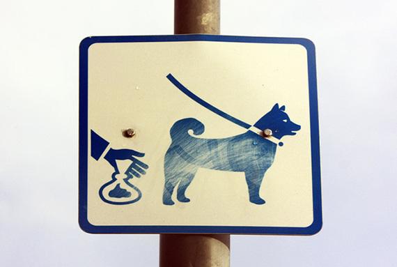 В мэрии готовят новые правила выгула домашних животных