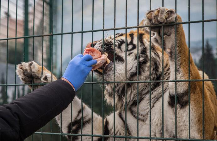 Брошенный на произвол судьбы одесский биопарк просит помочь прокормить животных (видеообращение)