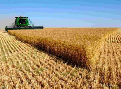Новый рынок земли: что предусматривает земельная реформа?