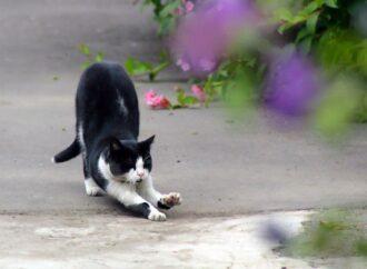 Коты на удаленке: одесситов приглашают к участию в онлайн-фотовыставке