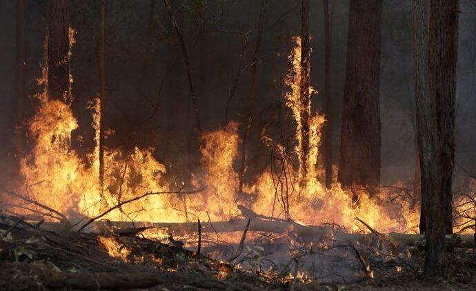 Грозят ли одесситам последствия лесных пожаров?