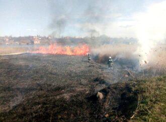 Во время пожара в природном парке на Одесчине сгорели уникальные животные и птицы