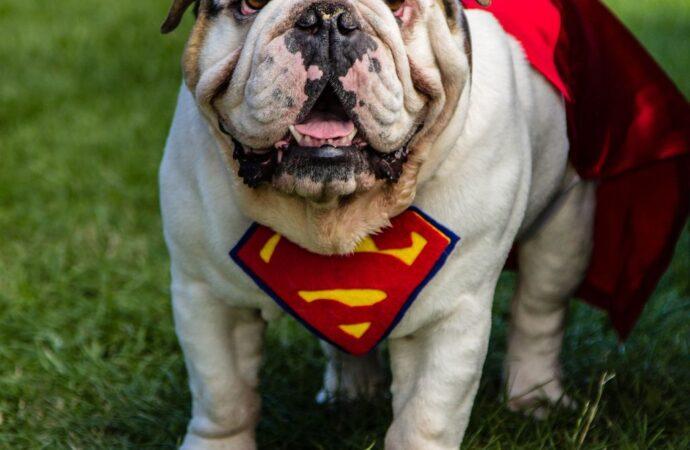 Одессит предлагает желающим прогуляться в карантин за деньги выгулять его собаку
