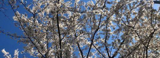 Погода на 6 квітня. В Одесі буде вітряно, але тепло