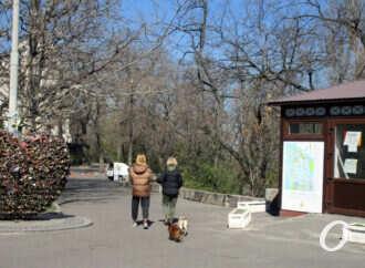 Двое в масках и с собакой: зоны отдыха в центре Одессы — на усиленном карантинном режиме