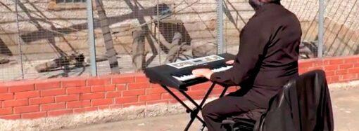 «Belle» для слонихи и «Мурка» для волков: в одесском зоопарке устроили карантинный концерт для зверей (видео)