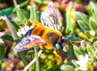 Заповедный парк близ Одессы населили рои диких пчел (фото)