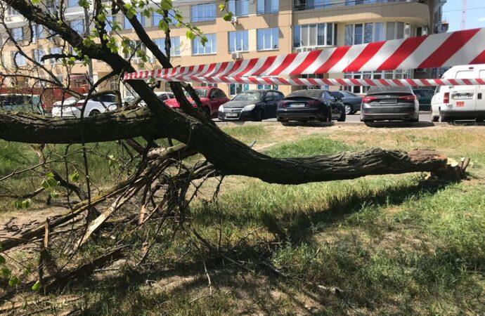 «Предстоит война»: неизвестные спилили деревья на территории парка Юность (фото)