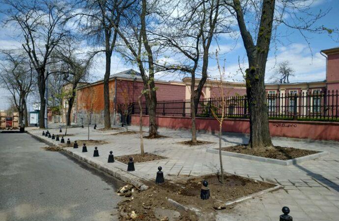 Территория возле Одесского художественного музея ожила новыми деревьями (фото)