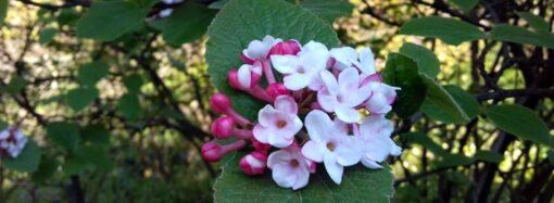 Наслаждаемся на удаленке: Одесский ботанический сад делится живой красотой (фото)