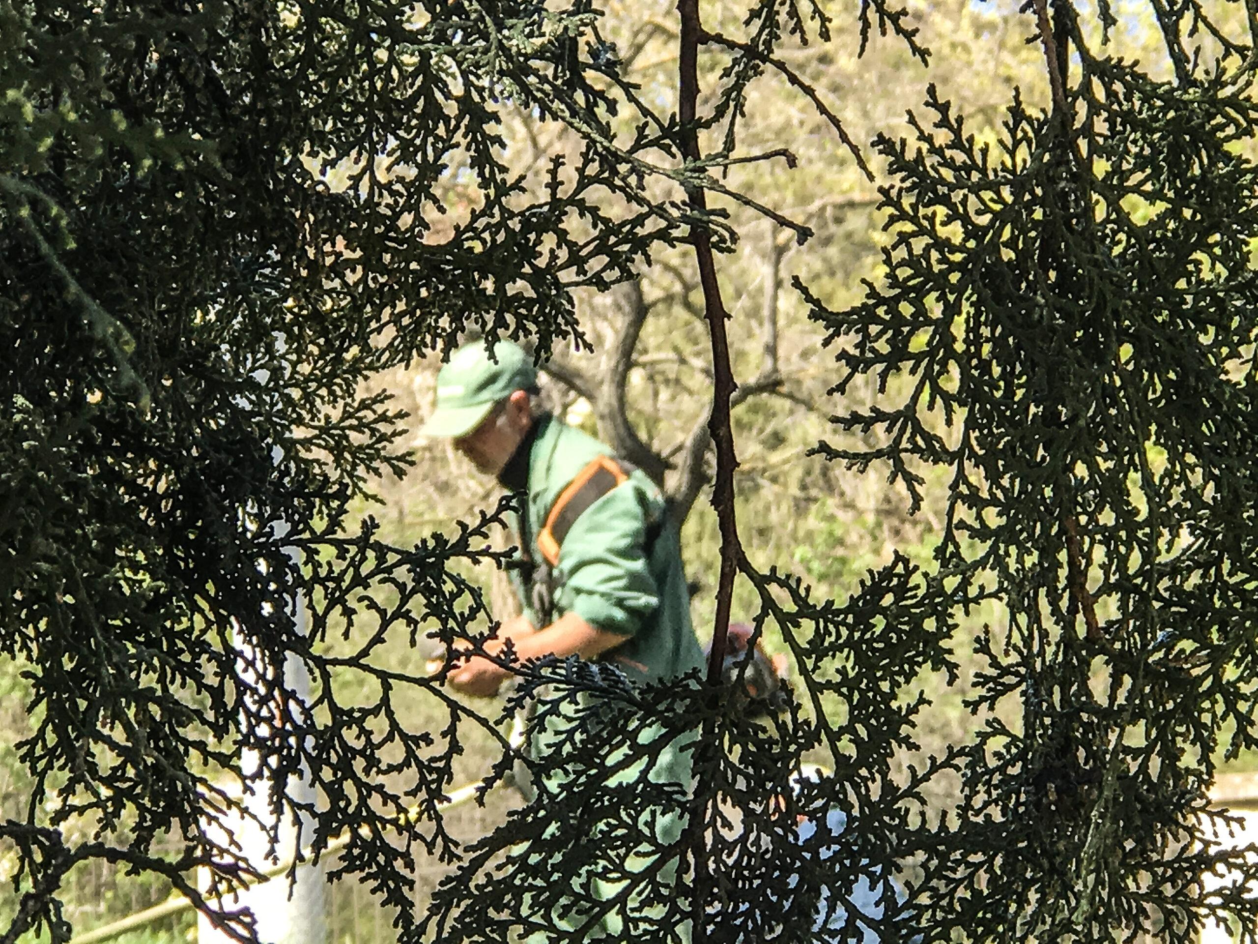 Рабочий посдтригает траву без защитной маски или респиратора
