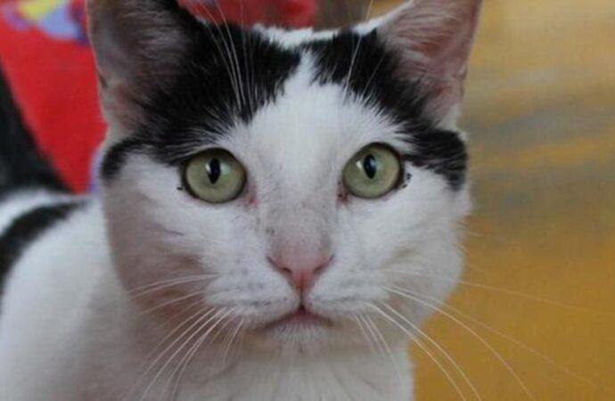 Прив'язав кота та тягнув по асфальту: в Одесі встановлюють обставини жорстокого поводження з твариною