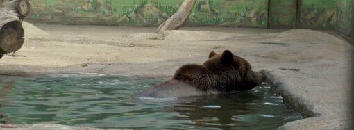 В Одеському зоопарку показали, як поживають тварини під час карантину (відео)