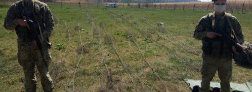 На Одещині у браконьєрів вилучили більше одного кілометра сіток та 60 раколовок (фото)