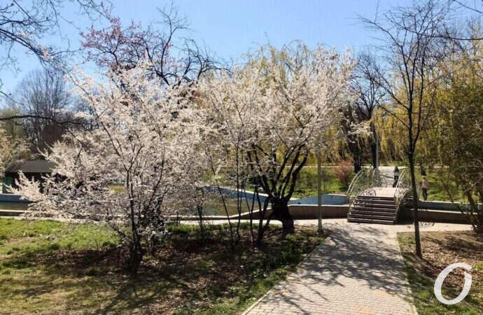 Погода на 8 квітня. В Одесі буде сонячно і тепло