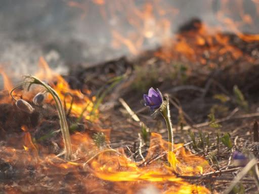 За пожар – по закону: как усилили ответственность за поджог сухой травы?