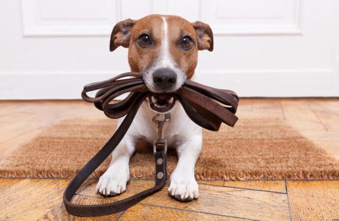 В парке гулять можно только с собакой: одесситы сдают своих четырехлапых в аренду для прогулки (фото)