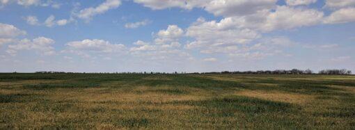 Посуха на Одещині: фермерам призначать грошову компенсацію за використання електроенергії для зрошення