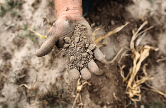 Американский сценарий: Одесчина превратилась в зону рискованного земледелия