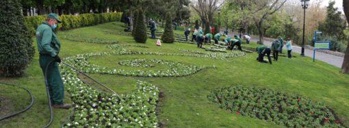 В Одесі комунальники планують висадити близько 600 тисяч квітів (фото)