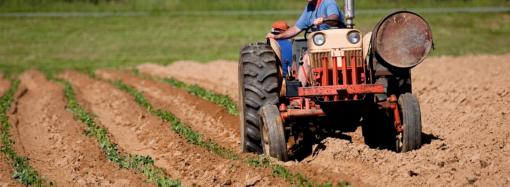 Засуха в Одесской области может угрожать продовольственной безопасности Украины – эксперты