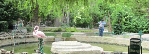 Одесскому зоопарку исполняется 98 лет: как отметят?