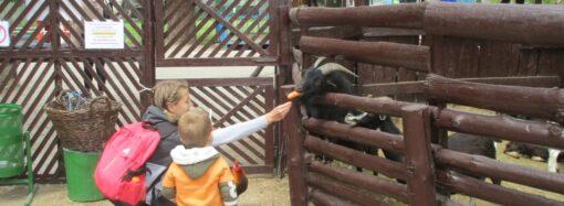 Что произошло в Одессе 15 мая: извинения губернатора и открытие Одесского зоопарка