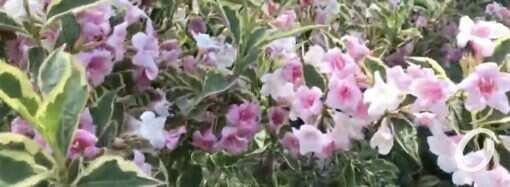 Одесский ботанический сад открылся для посещений: что мы увидели своими глазами (видео)