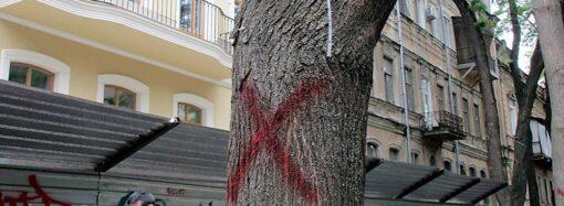 В центре Одессы нескольким деревьям сделали смертельную инъекцию (фото)