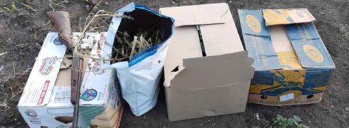 Человек с ружьем и наркотиками: в Одесской области обнаружили большую маковую наркоплантацию