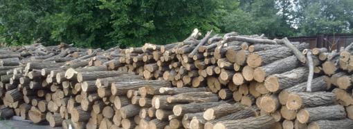 Виды дров: что выбрать для печи и камина