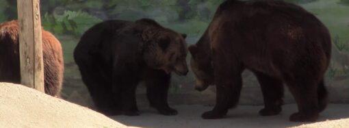 Хліб з медом і шишки: як в Одеському зоопарку діти годували ведмедів? (відео)